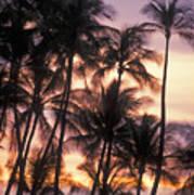 Big Island Palms Poster