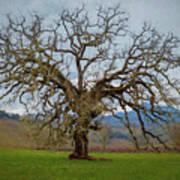 Big Oak Poster