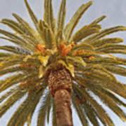 Big Palm Poster