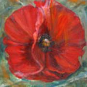 Big Red Poppy Poster