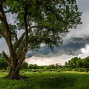 Big Tree - Tall Cottonwood And Storm In Texas Panhandle Poster