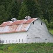 Big White Old Barn With Rusty Roof  Washington State Poster