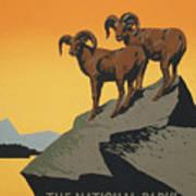 Bighornthe National Parks Preserve Wild Life Poster