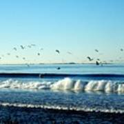 Billowing White Waves And Seagulls Poster
