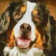 Bimbo - Bernese Mountain Dog Poster
