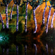 Birch Forest Reflections Poster