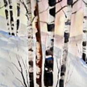Birch In The Snow Poster