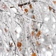 Frost Birch  Poster