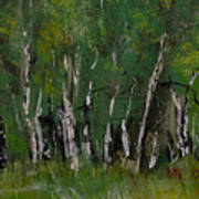 Birch Tree Panorama Poster
