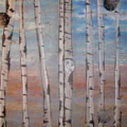 Birch Trees - Clouds Poster
