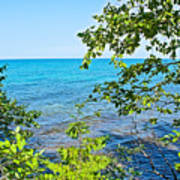 Birch Trees Above Lake Superior Off North Country Trail In Pictured Rocks National Lakeshore-mi Poster