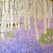 Birch Trees And Grape Hyacynths Poster
