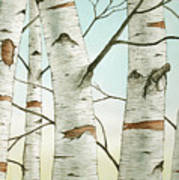 Birch Trees In Late Autumn Poster