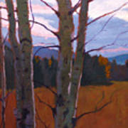 Birches At Twilight Poster