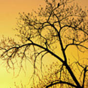 Bird At Sunset Poster
