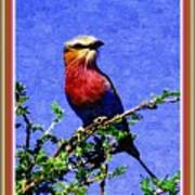 Bird Beauty - No 7 P B With Alternative Decorative Ornate Printed Frame. Poster