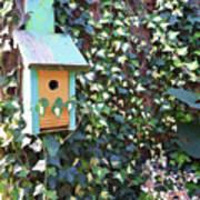 Bird Feeder In Ivy Poster
