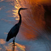 Bird Fishing At Sundown Poster