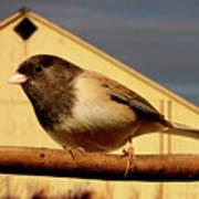 Bird House . 40d11078 Poster