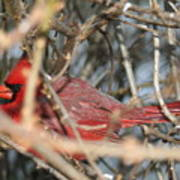 Bird In A Bush Poster