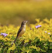 Bird in a Garden Poster