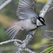 Bird In Action 2 Poster