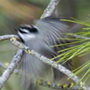 Bird In Action Poster