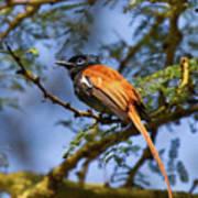 Bird In High Ground Poster