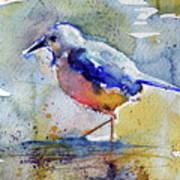 Bird In Lake Poster