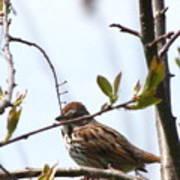 Bird In Spring Poster