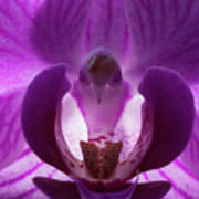 Bird In The Orchid Poster