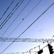 Bird Invasion Poster
