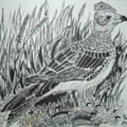 Skyirk Bird Poster