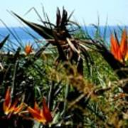 Bird Of Paradise By The Sea Poster