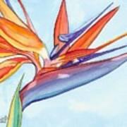 Bird Of Paradise IIi Poster