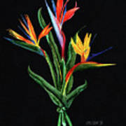 Bird Of Paradise In Black Poster