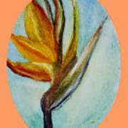 Bird Of Paridise Poster