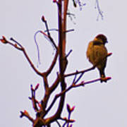 Bird On A Bud Poster