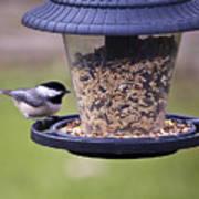 Bird On Feeder Poster