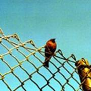 Bird On Fence Poster