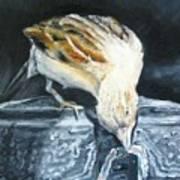 Bird Original Oil Painting Poster by Natalja Picugina