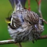 Bird Perch Poster