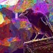 Bird Rain Rest Animals  Poster