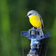 Bird Siting On A Water Sprinkler Poster