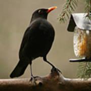 Bird Table Poster