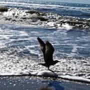 Bird Taking Flight On The Shore Poster