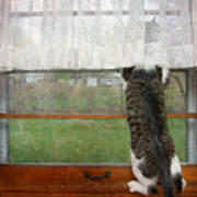 Bird Watching Kitty Cat Poster