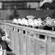 Birdman Of Lower Manhattan Poster