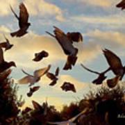 Birds And Fun At Butler Park Austin - Birds 1 Poster