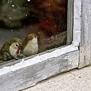 Birds In A Window Poster
